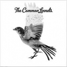 COMMON LINNETS - Common Linnets